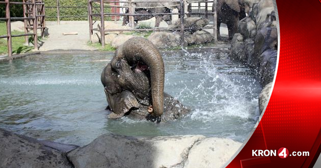 elephant_121874