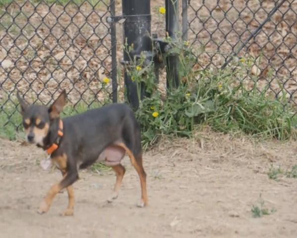 031715-Santa-Cruz-dog_131513