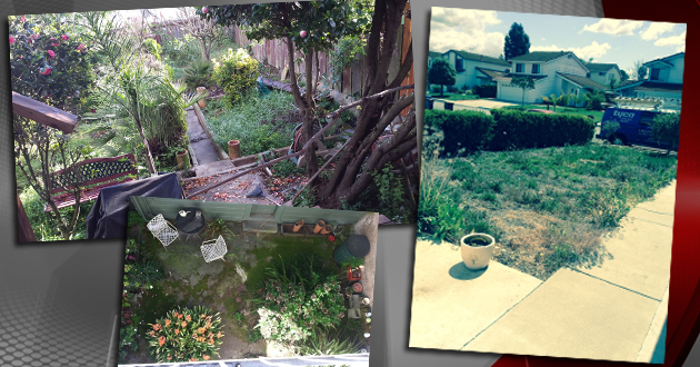Free Makeover For Winner Of Ugliest Yard In San Francisco Contest