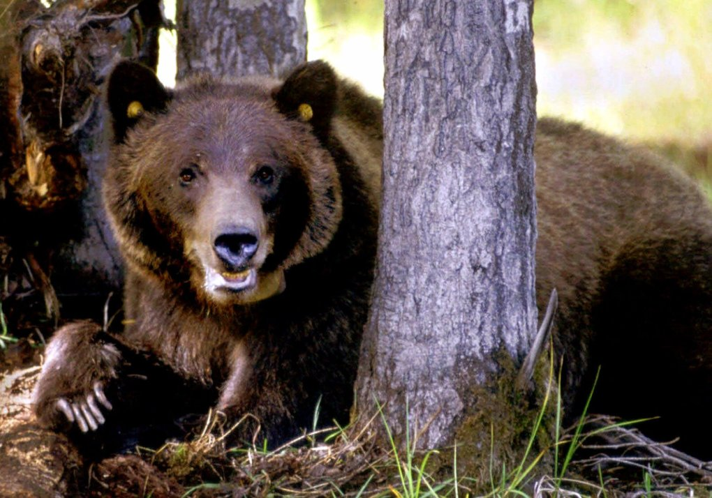 GRIZZLY_211213