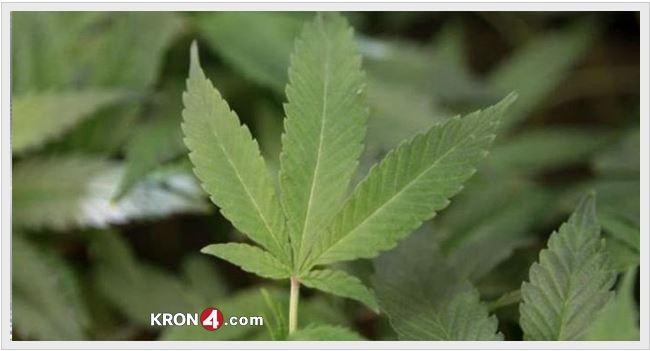 pot, marijuana, weed_198476