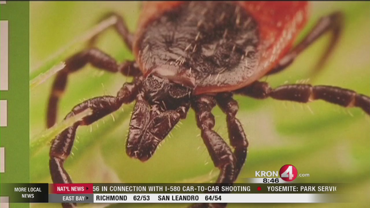 VIDEO: May is Lyme Disease Awareness Month