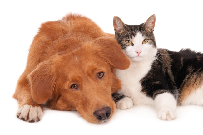 Cat and dog in a friendly pose_678757
