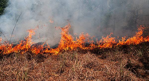 pinole fire
