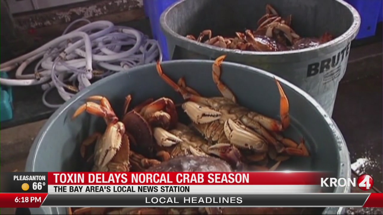 Toxin delays Northern California Dungeness crab season