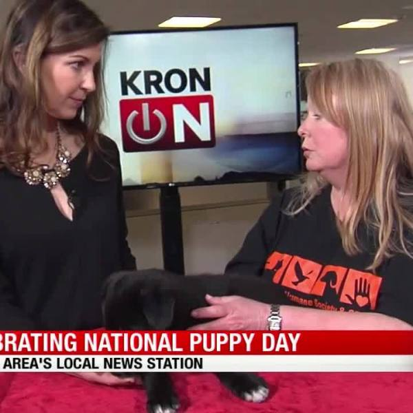 Celebrate National Puppy Day!