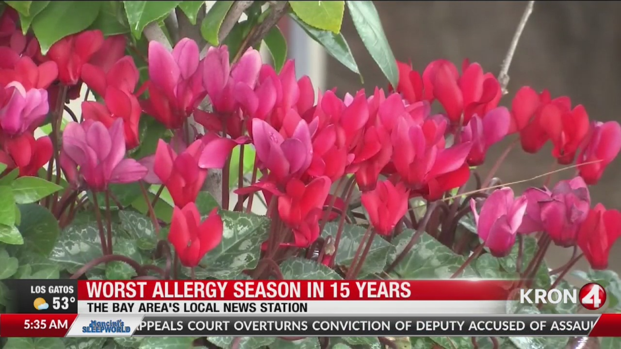Bay Area to experience worst allergy season in more than a decade