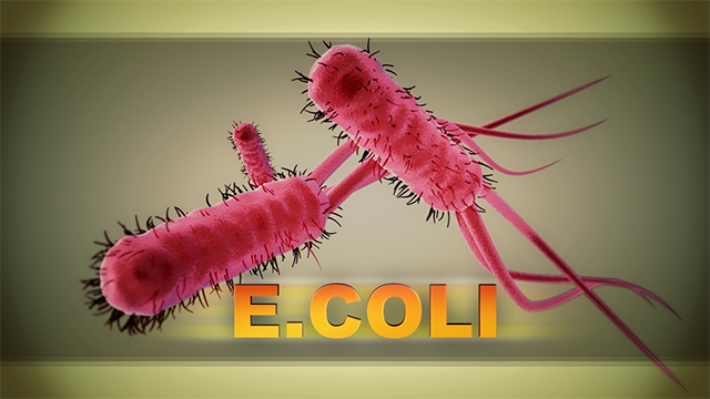 e coli ecoli cdc generic web ap_1554495892519.jpg.jpg