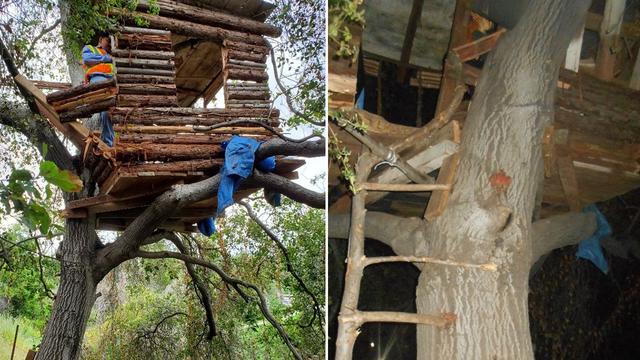 treehouse_1558727621205_88985461_ver1.0_640_360_1558734592082.jpg