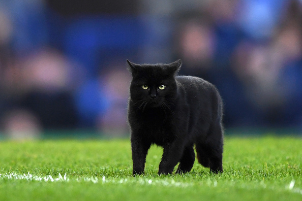 Black Cat Steals The Show During Monday Night Football Kron4