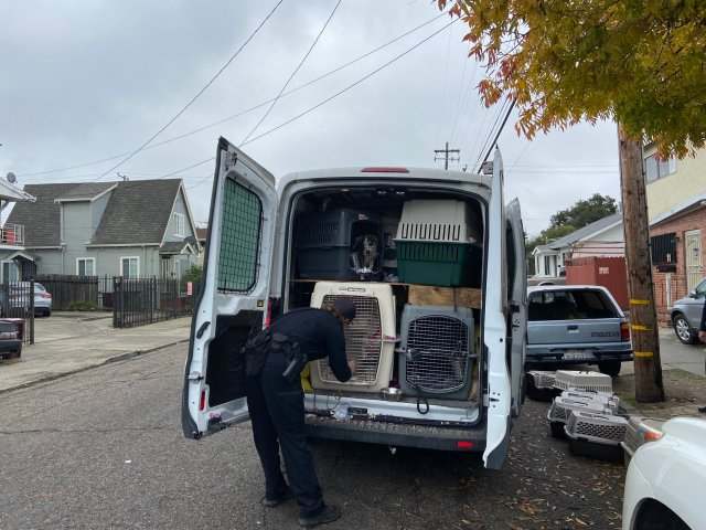 Oakland police help recover stolen van with 25 dogs inside
