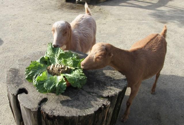 San Francisco, Kansas City zoos kick off friendly competition ahead of Super Bowl