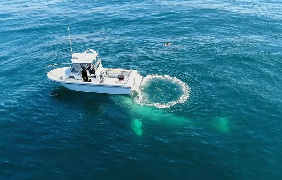 Whale encounter