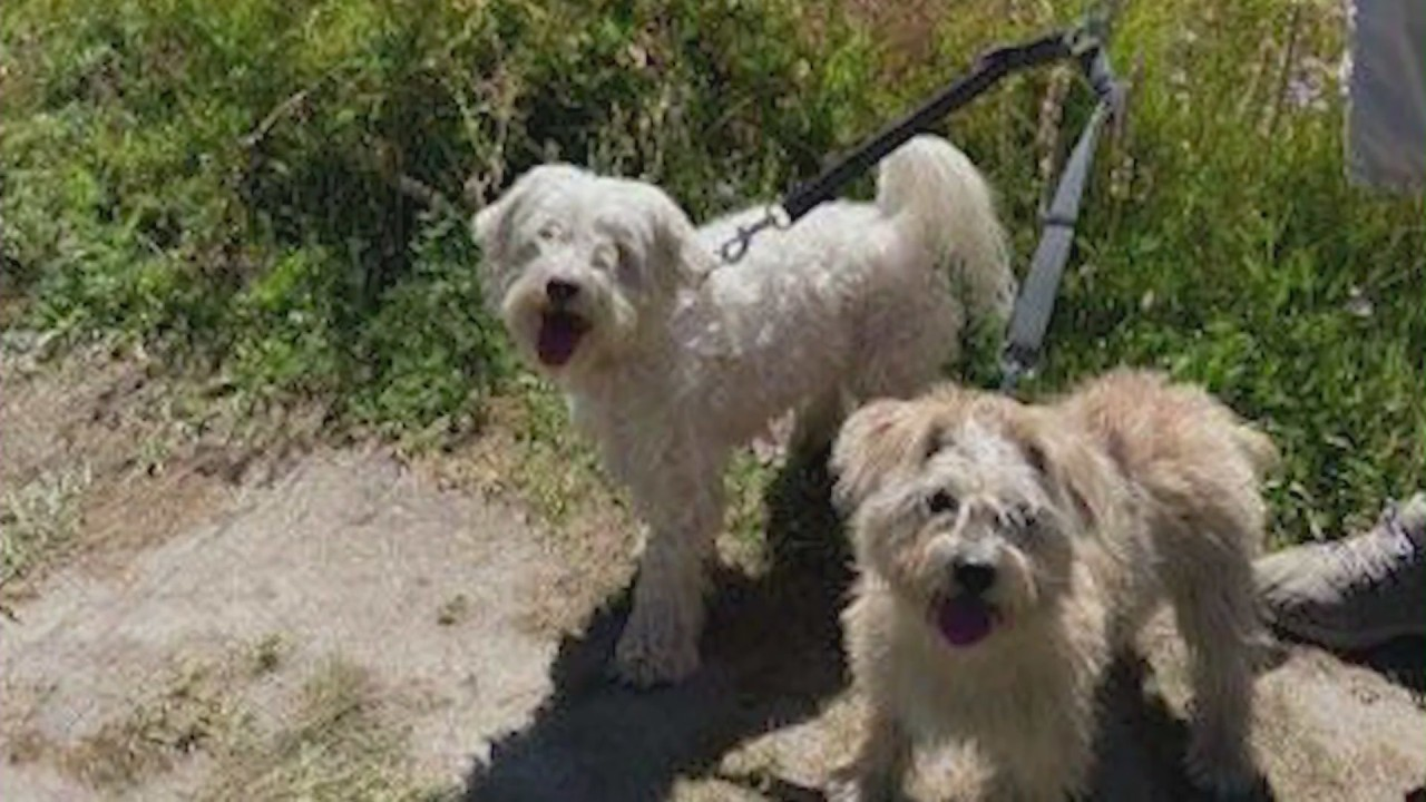 California man recounts fighting off terrifying bee swarm that killed 2 dogs