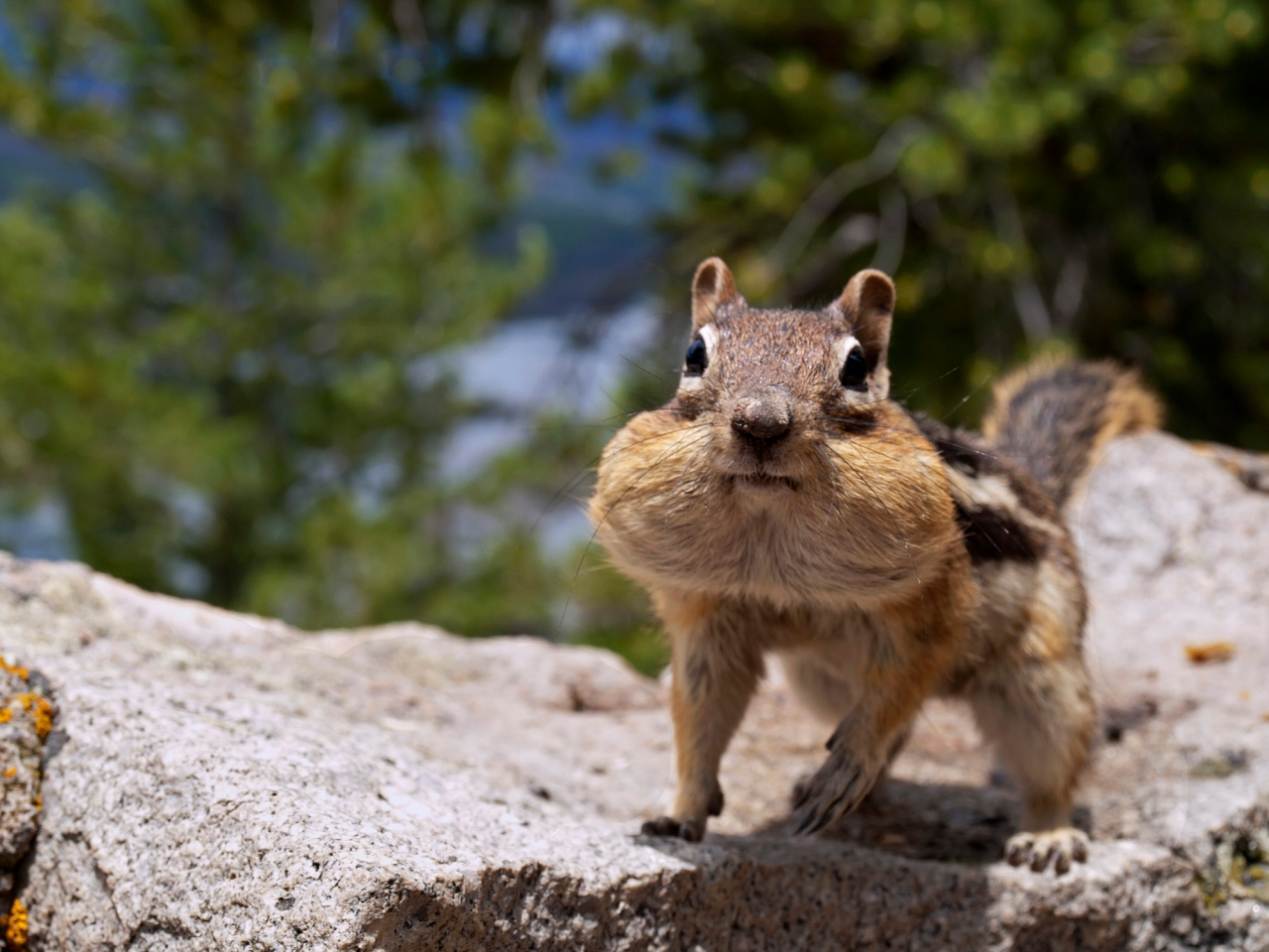 Plague-carrying chipmunks prompt closure of areas around Lake Tahoe