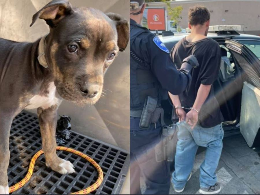 Police arrest man for allegedly abusing puppy in Antioch